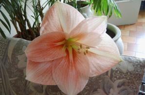 La fleur de la fierté et de la vanité.