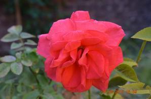 photos de fleur prise le 27 juin 2015