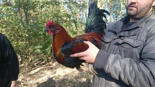 poulet tony