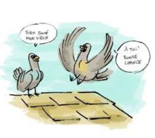 pour mes amis colombophile