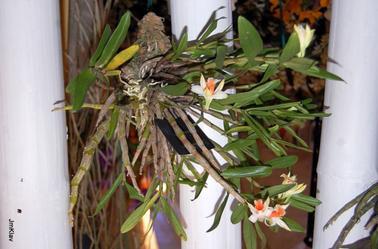 ORCHIDEES, DES FLEURS EXOTIQUES DANS NOS INTERIEURS .... CONFINES