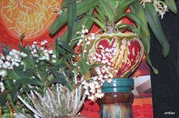 ORCHIDEES : LE PHALAENOPSIS