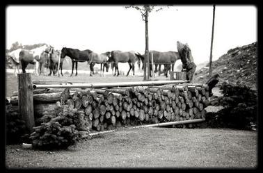 - Mon centre Equestre ♥.