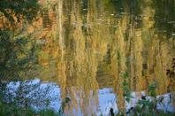 reflets de l'eau