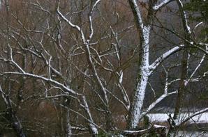 La vie sous le manteau blanc et le gel