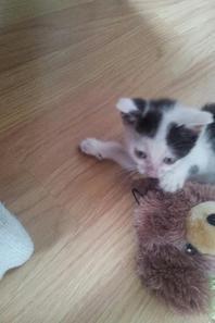 Notre bébé Garfield <3