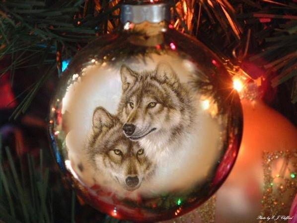 Mes loups !!