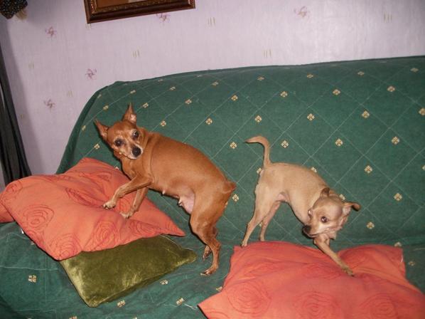 lilas et chloe