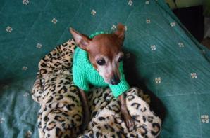 lilas et chloe et son nouveau pull