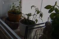 Ma Fenêtre de Cuisine