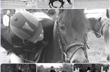 """Je demande aux cavaliers qui me lisent et qui dressent leurs chevaux de regarder leur monture lorsqu'ils mettent pied à terre après une séance de travail, de contempler son ½il et de faire un examen de conscience pour se demander s'ils ont bien agi envers cet extraordinaire être vivant, ce compagnon adorable : le cheval."""""""