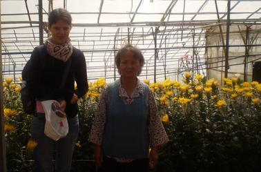 Artichauts et chrysanthèmes ce mardi