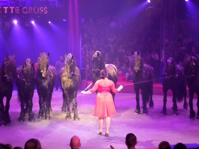 Cirque arlette gruss lille adresse