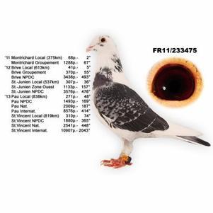 Présentation , reproducteur , origine  ?c=mog&w=301&h=301&im=%2Fart%2FPRIP.79665441.12.2
