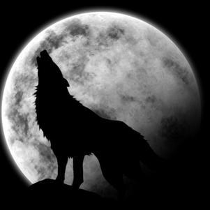 même solitaire un loup se débrouilleras TOUJOURS....!