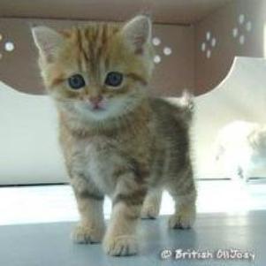 Son profil petit chaton tout mignon - Chat tout mignon ...