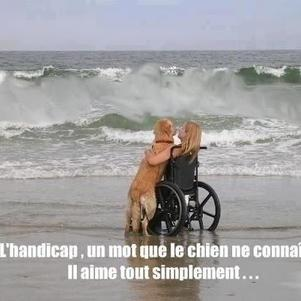 Moi ici non mais idem fauteuil électrique et mm chien