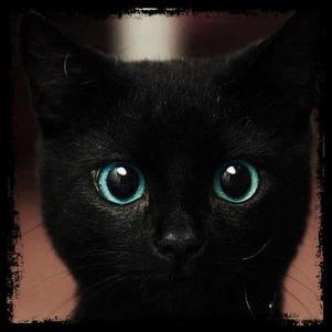 *-* mon chat lui ressemble.. *0*