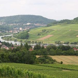 La Moselle entourée de vignobles