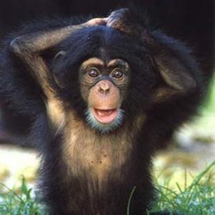 Ses Photos - singe-drole - Skyrock.com