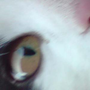 ℓ'oeuiℓ de mon chat