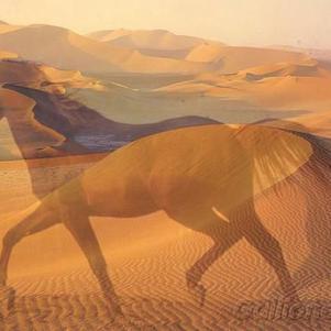 Cheval du desert
