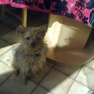 mon titi chien bounty