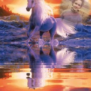 me revoila avec un cheval avec un couché de soleil