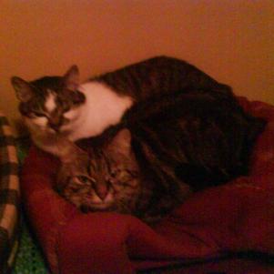 félin et nana sont couché
