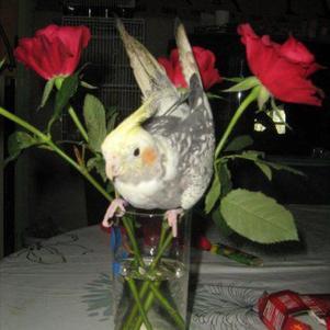 saint valentin de zeus