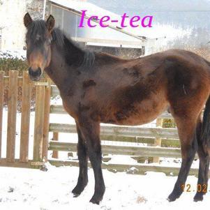 Je t'aime Ice-tea
