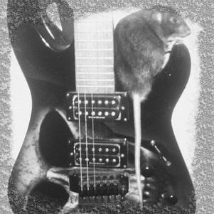 Black pearl et guitare