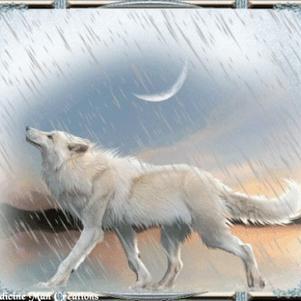 Loup Arctik en fanart
