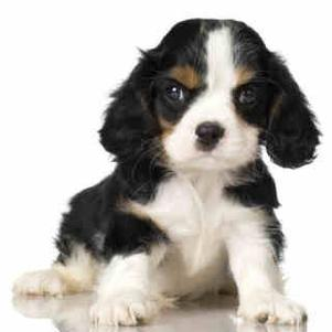 voici mon chien scoubidou