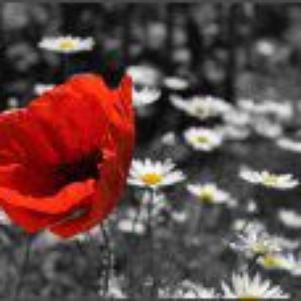 Une fleur pour vous ^^