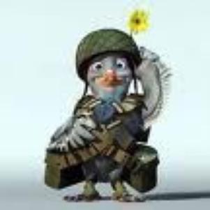 pigeon pour barcelone lol
