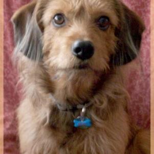 Mon chien Kéomy est fimoté aussi :)