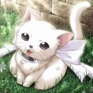 Blanca, ma jolie petite chatte blanche ♥