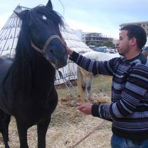 mon chevale .....