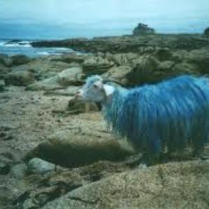 Yasmi en chèvre.