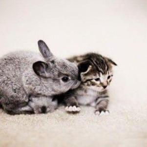 Le baiser est la plus sûre façon de se taire en disant tout