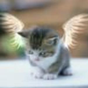 Tout à fait moi un vrai petit Ange lol