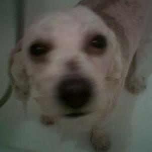 mon chien dans le bain !