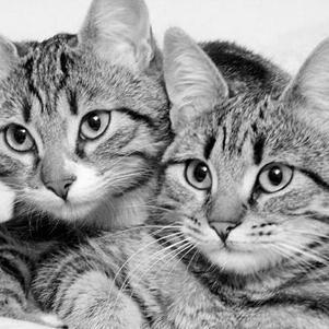 j'adore les chats