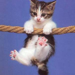 trop mignon ce chat
