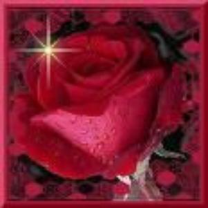 j aime la rose