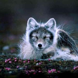 un ptit renard tous ce que j'aime