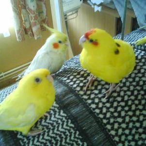 mes eam qui ont rejoint le paradis des oiseaux