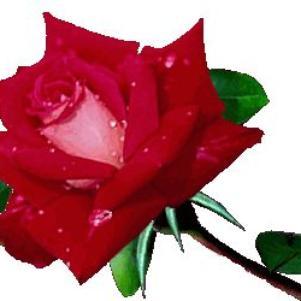 la fleure du...........