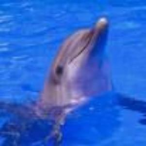 dauphin c cro mimi